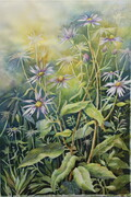 Alberta Wild Flowers: Asters